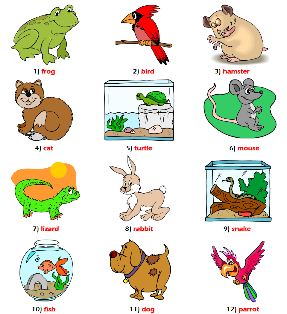essay on pet cat for kids